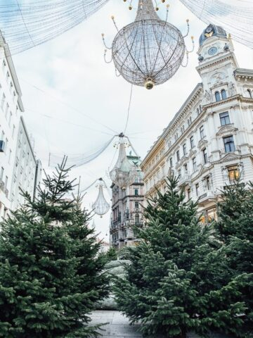 Lights and trees decorating Vienna