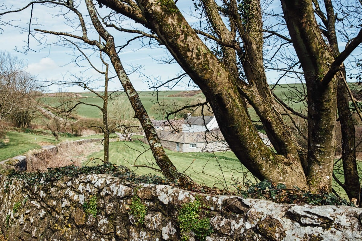 Welsh farm seen through trees