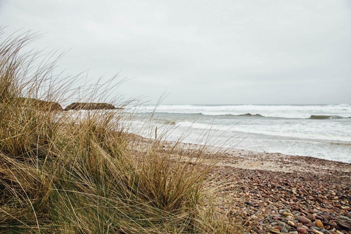 Freshwater West beach with tuft of grass