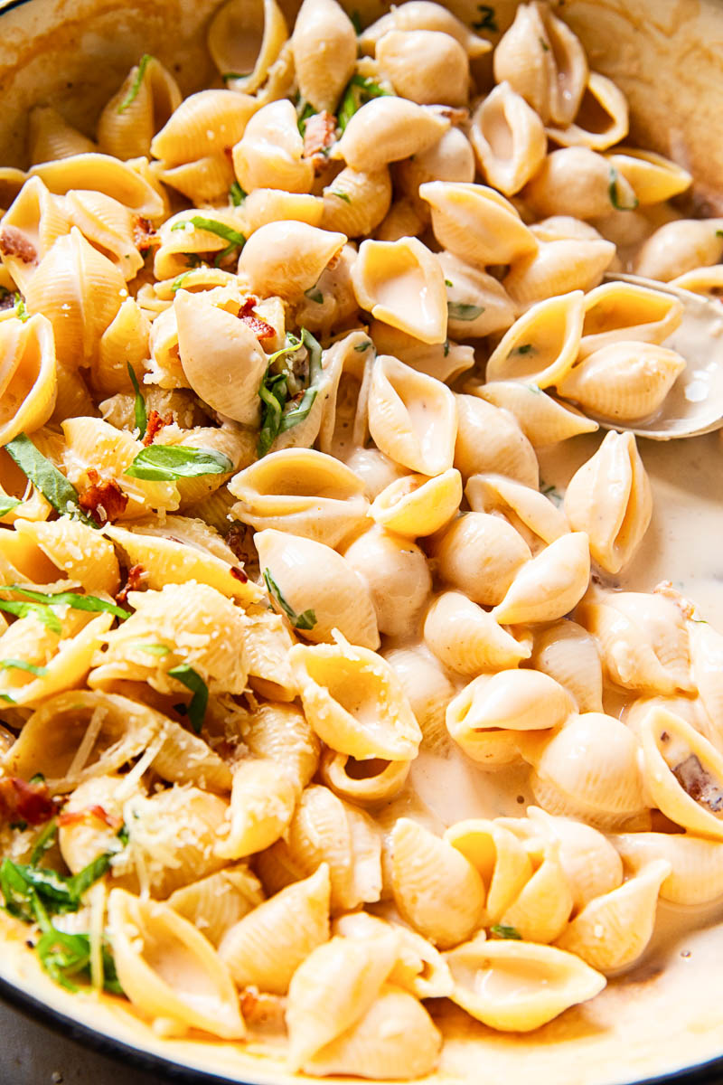 pasta shells in creamy sauce