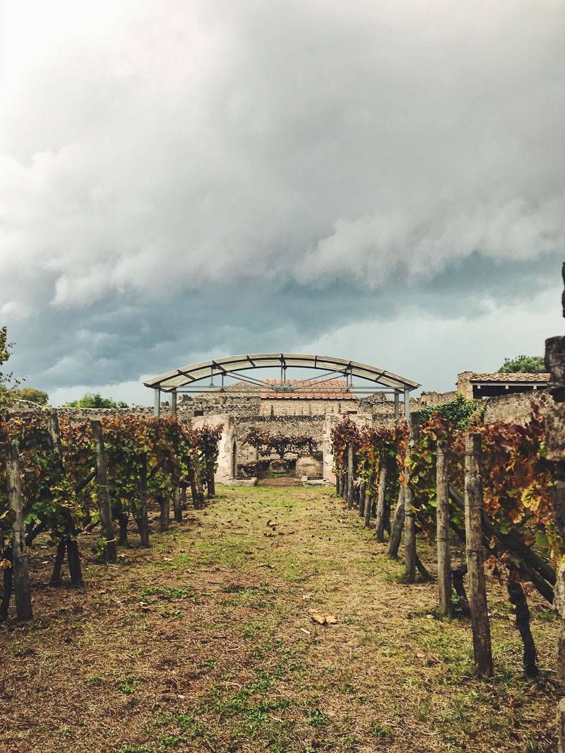vineyard in Pompeii, Italy
