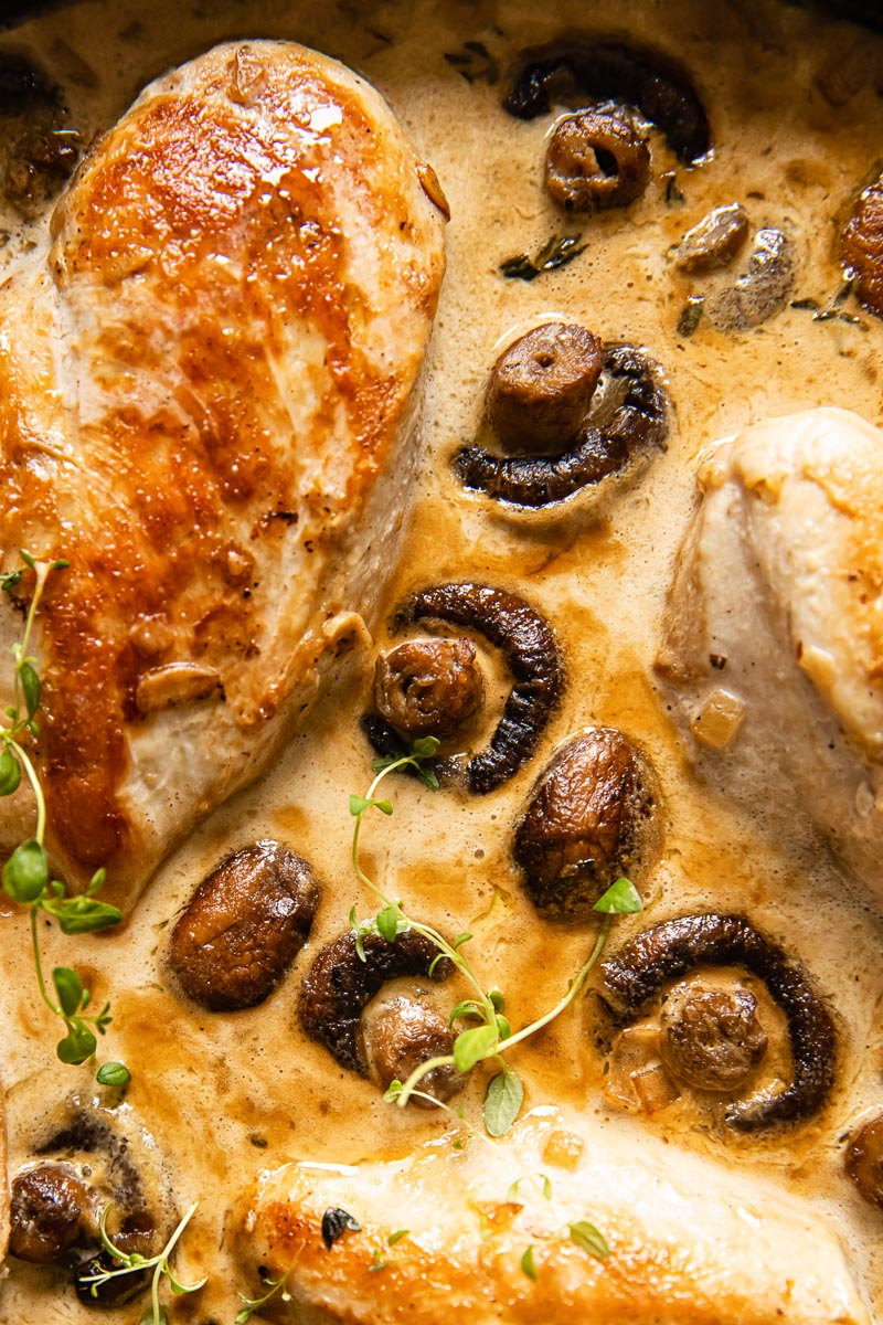 chicken supreme with mushrooms and cream sauce close up
